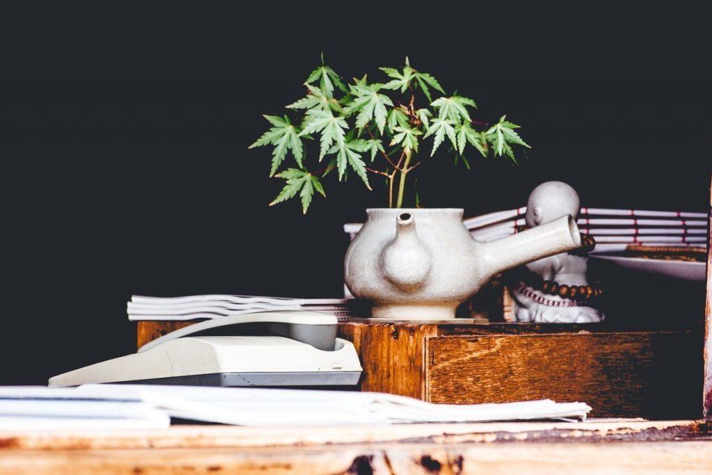 organic cannabis cbd