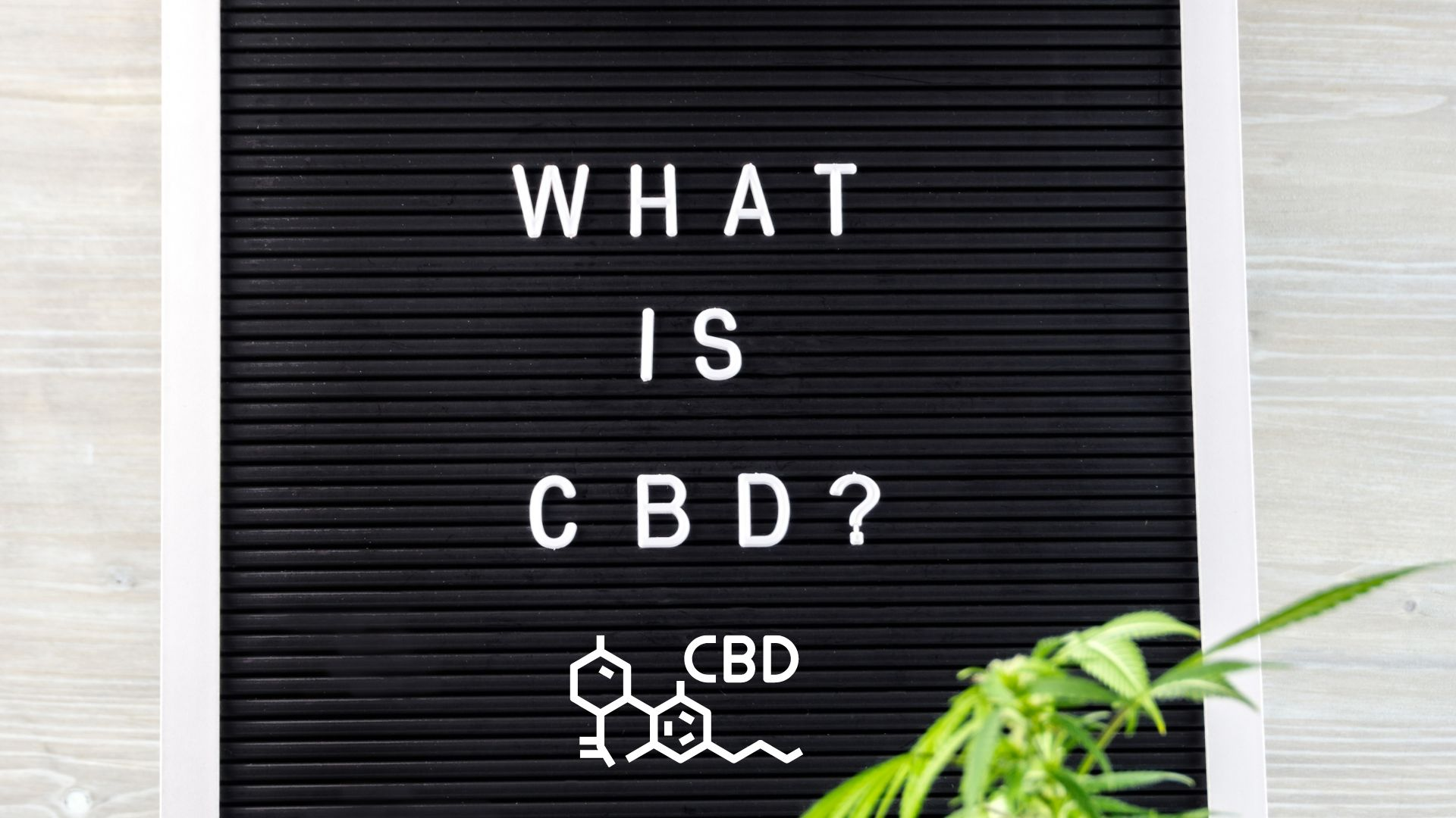 Read more about the article WHAT IS CBD? OUR BEGINNER'S GUIDE